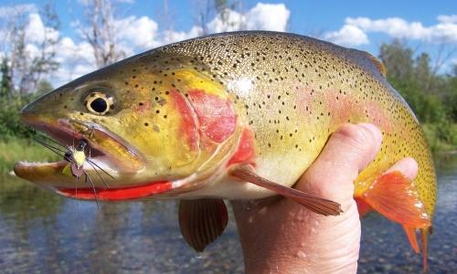 Fishing Montana in June