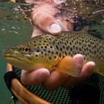 Fishing for Lake Trout