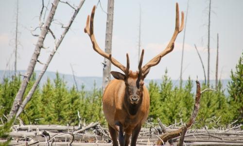 Montana Hunting & Fishing