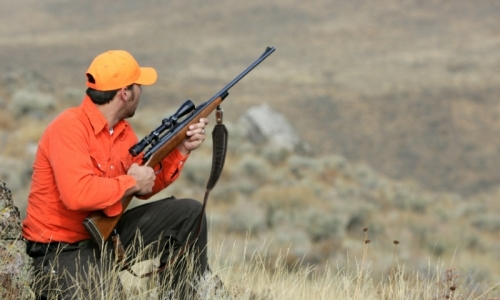 Montana Hunting Reports