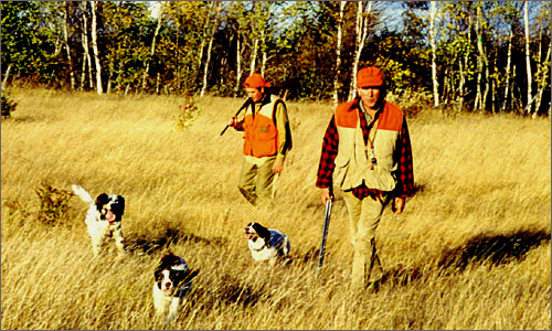 Pheasant Hunting with dogs