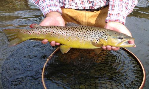 Fishing Montana Lakes & Rivers