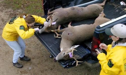 hunting check station