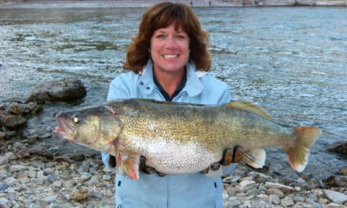 hauser dam walleye