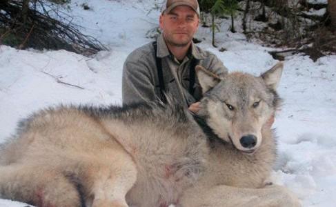 wolf ninemile