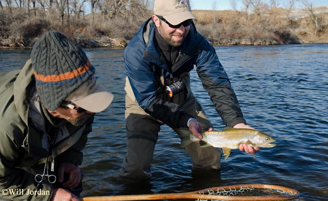 Bighorn river fishing report montana hunting and fishing for Bighorn river fishing report