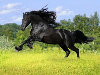 horsemidnight