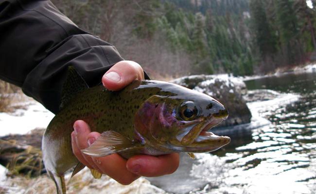 The montana fishing company post of the week montana for Montana fish company