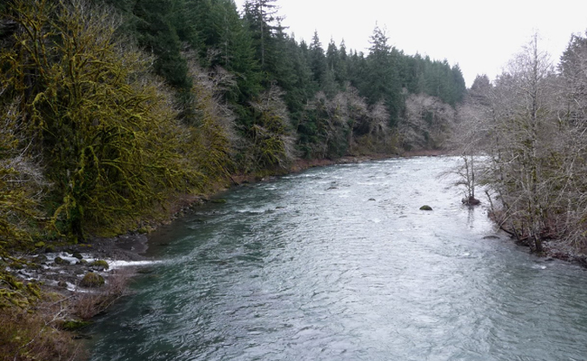 Forks wa steelhead montana hunting and fishing information for Sol duc river fishing