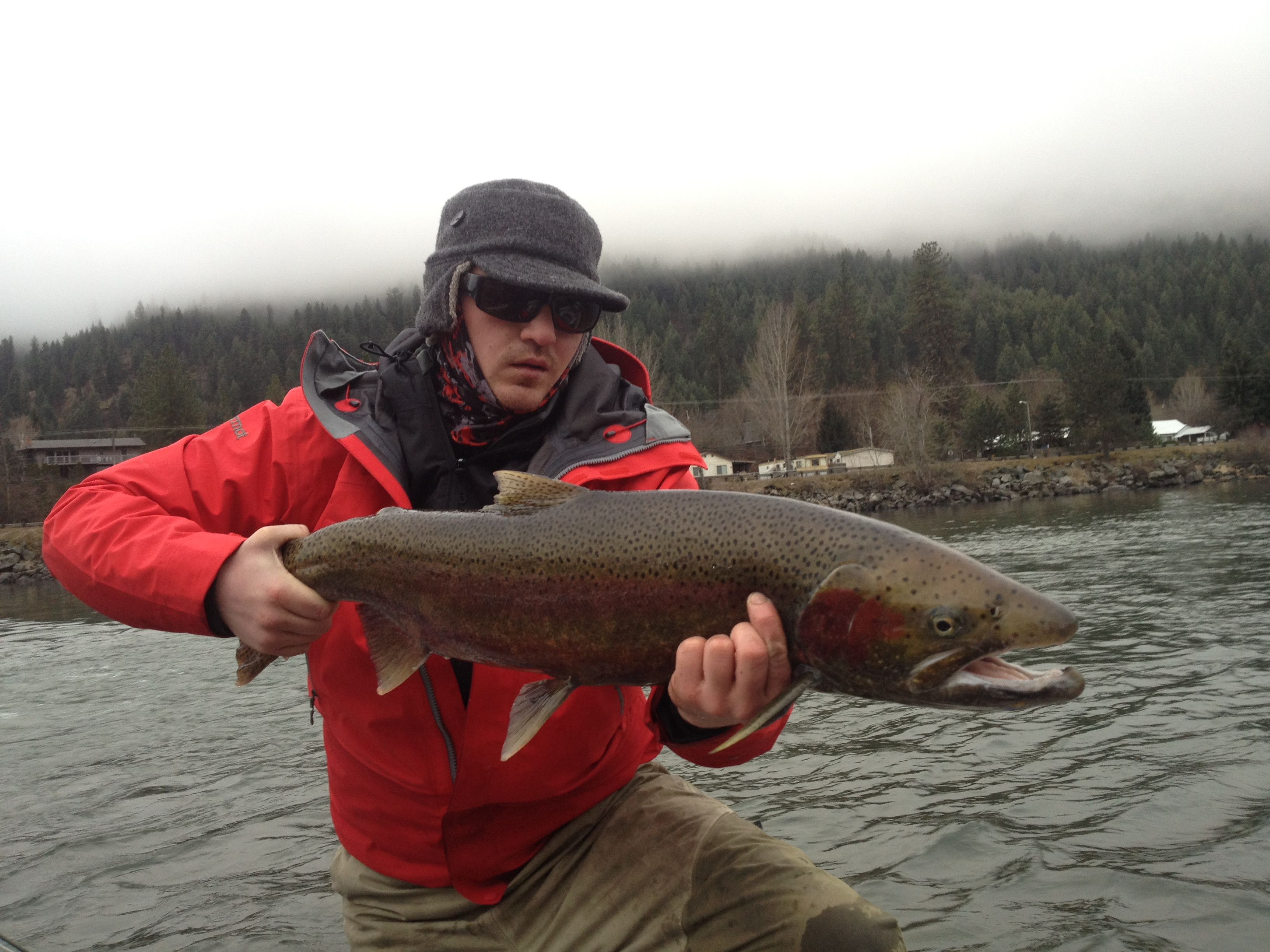 Another nice male montana hunting and fishing information for Idaho steelhead fishing report