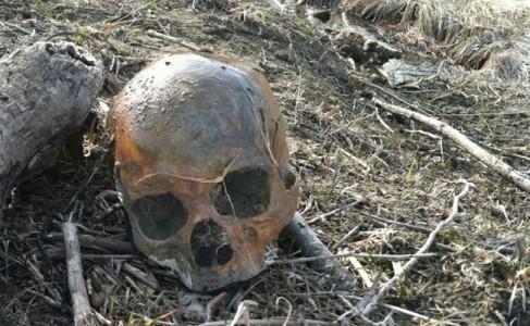 LOC041112-skull2