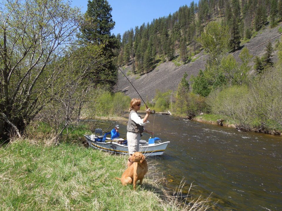 Improving fishing opportunities in the western montana fly for Montana fly fishing report