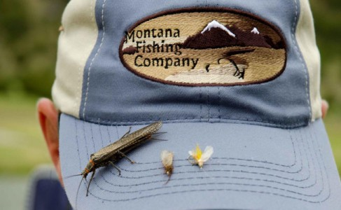 Dry fly action is heating up in the montana fishing for Montana fish company