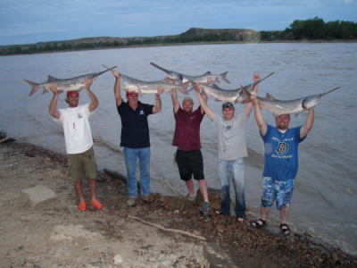Montana river monsters paddlefish season this 4th of for Montana out of state fishing license