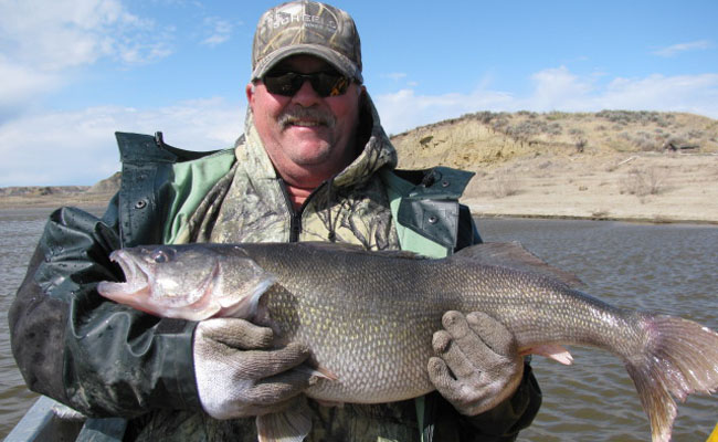 almost everything is biting on fort peck reservoir
