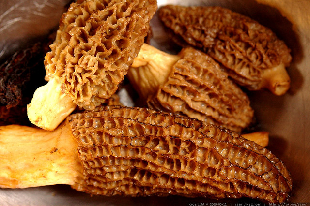 Morel mushrooms how to find them montana hunting and for Morel mushroom recipes food network