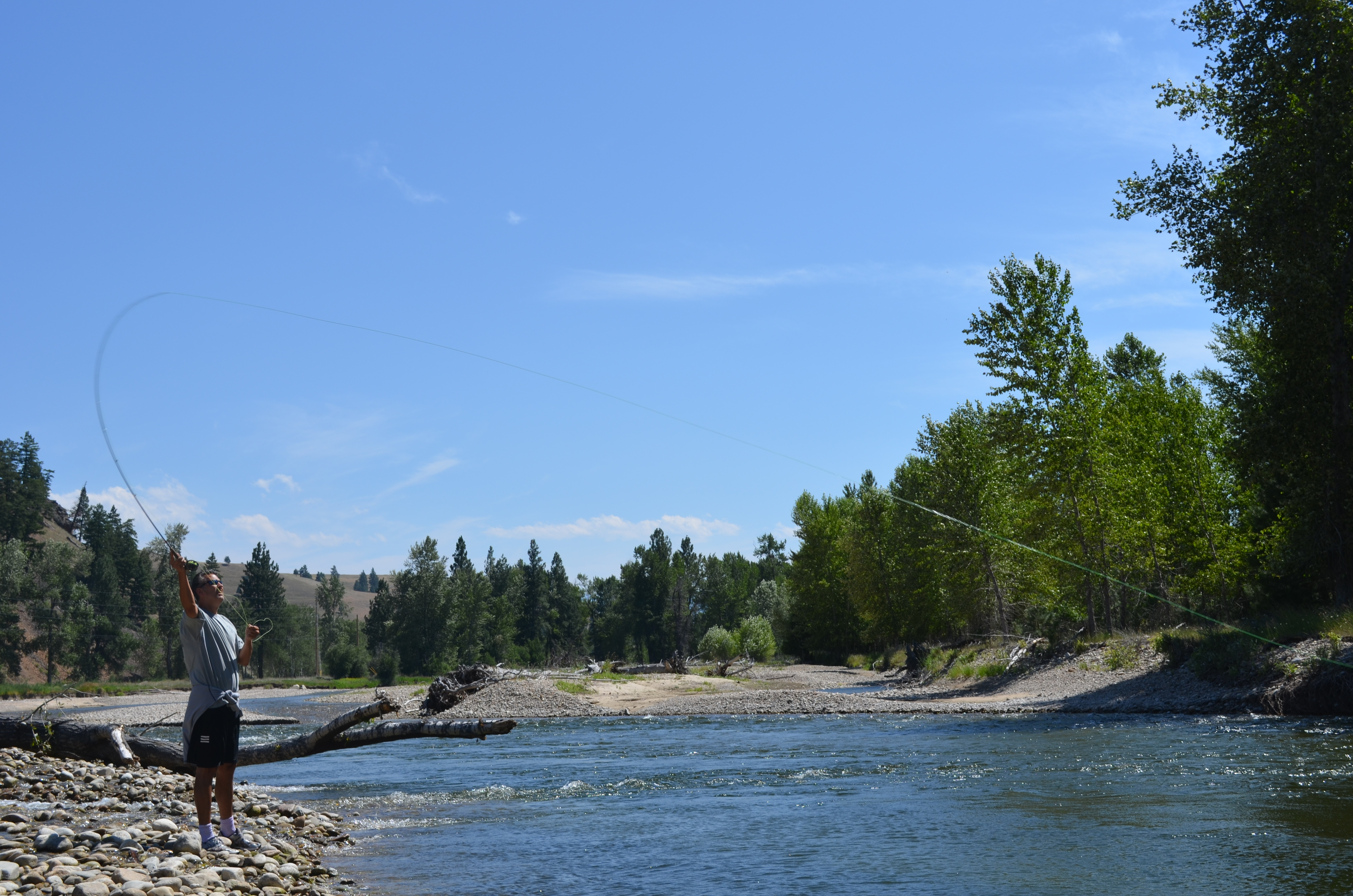 Great fly fishing in western montana in the montana for Montana fish company