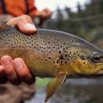 2335_6285_Bozeman_Montana_Fly_Fishing_md