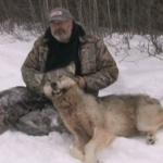 Wolf Shot by Hunter