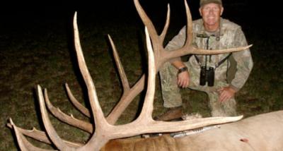 Massive Bull Elk