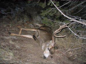 D9D6_Poached_Deer