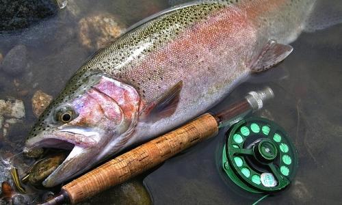 Flathead lake fishing tournament montana hunting and fishing for Flathead lake fishing