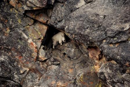 goat cave