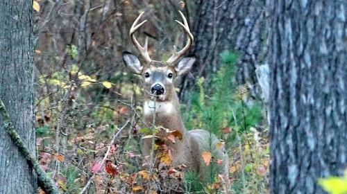 deer1-6b71155b9a5e63c1