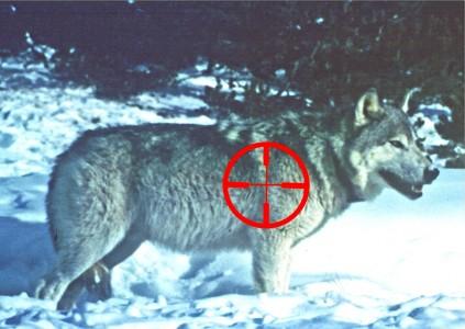 wolf crosshair