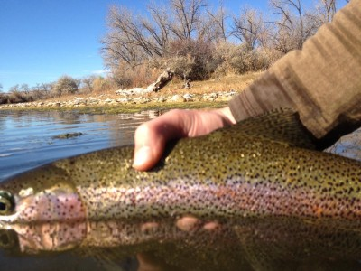 Bozeman butte recreation report by bob ward and sons 3 for Bozeman fishing report