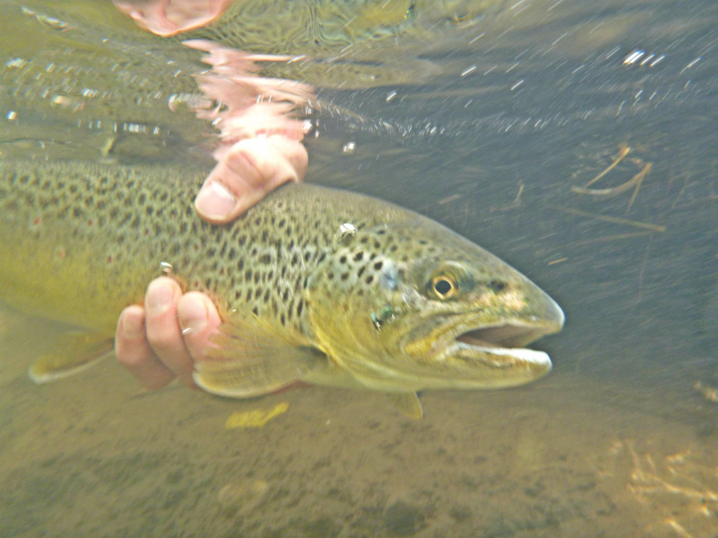 Butte bozeman recreation report by bob ward and sons 4 for Bozeman fishing report