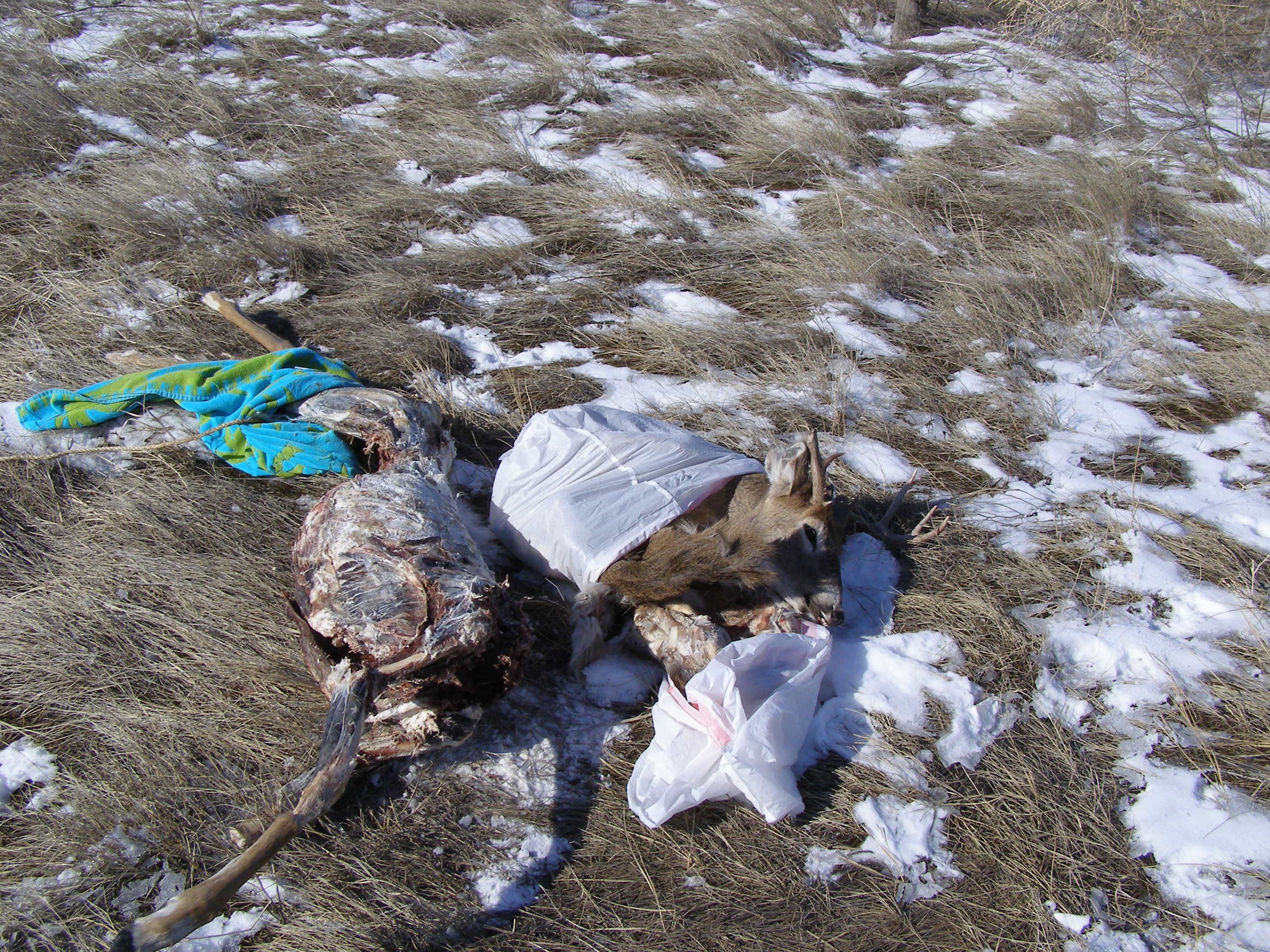 Fwp reports tips sought in wasted game case montana for Montana game and fish