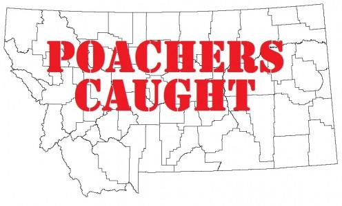 poacherscaught