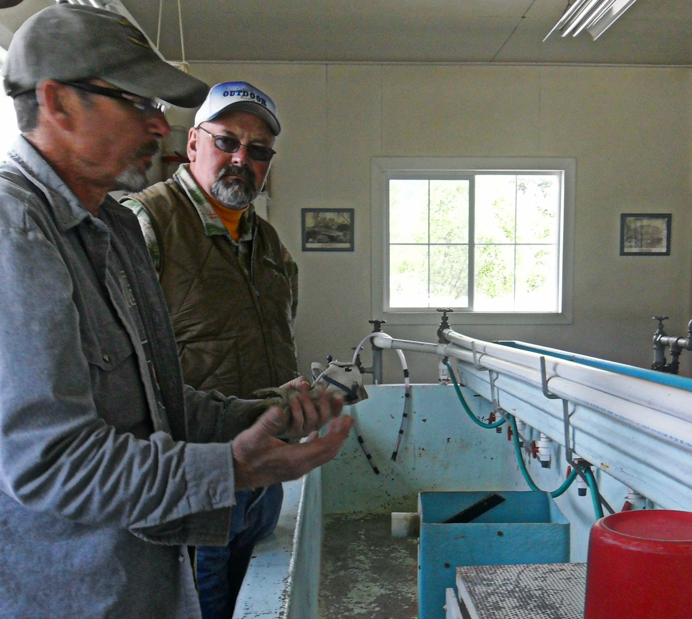 Ron Snyder, FWP Fish Culturist, was explaining what they do with the fish at the hatchery)