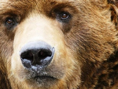 640px-Grizzly-Bear-Face-1-
