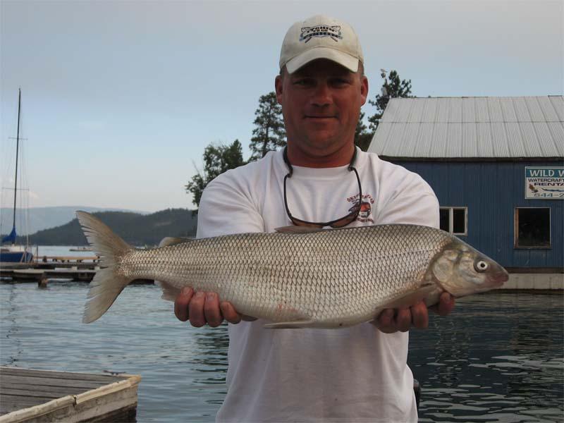 Will the lake superior whitefish bite this year on for Whitefish montana fishing