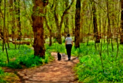 6752042-woman-and-two-dogs-walking-among-newly-growing-blue-bells-in-forest