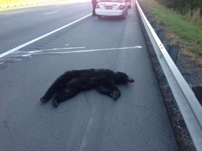 Black Bear Dead