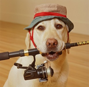 dog_fishing_getty-13081606071