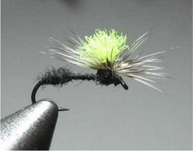 flypics090-1