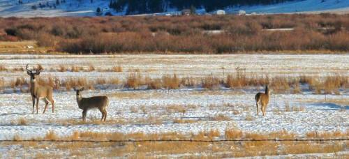BeFunky_LOC091113-deer.jpg