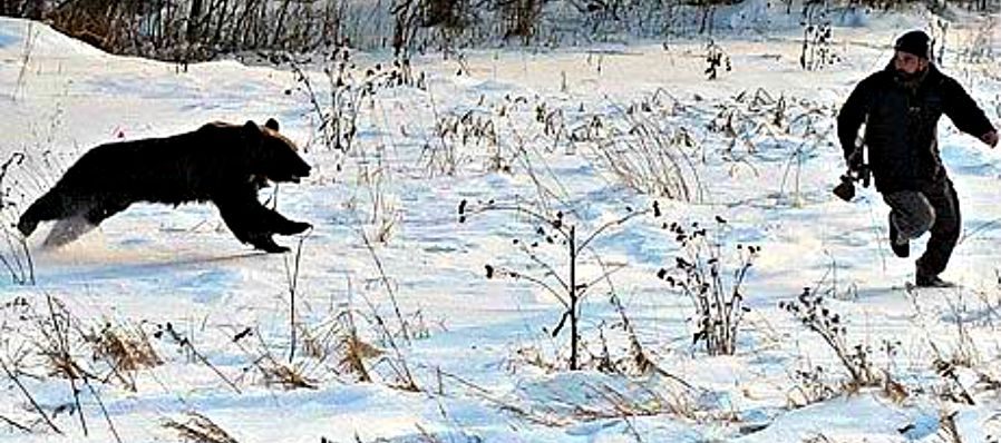 Hunters must expect to see bears montana hunting and for Montana fishing season