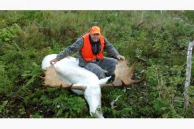 white moose1