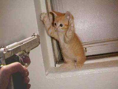 cat-shoot
