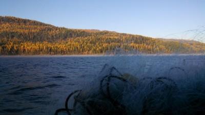 swan lake oct 2013