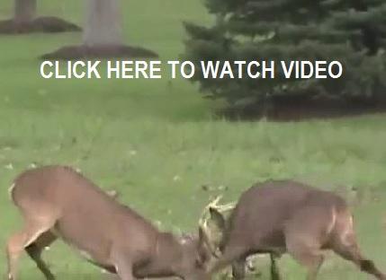 backyardbucks1