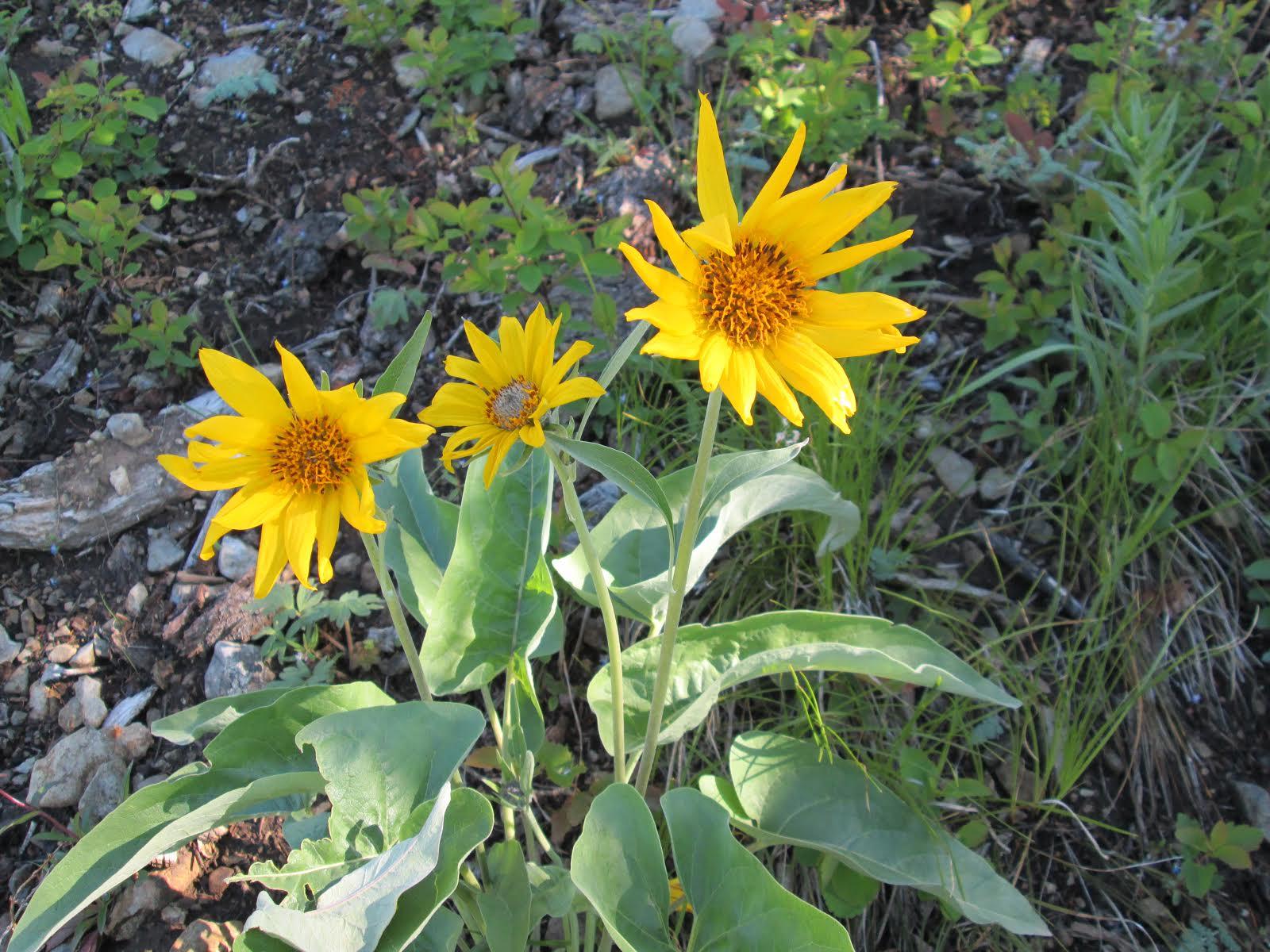 otgflower