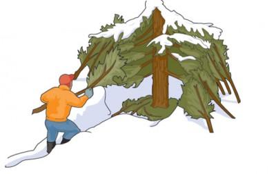 TreeShelter_29