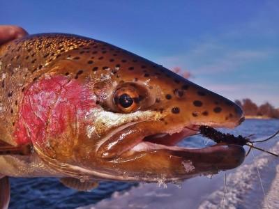fishtalesrep2