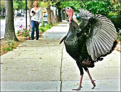 BeFunky_turkeysir.jpg